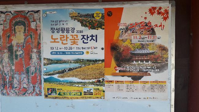 장성황룡강 노란꽃잔치
